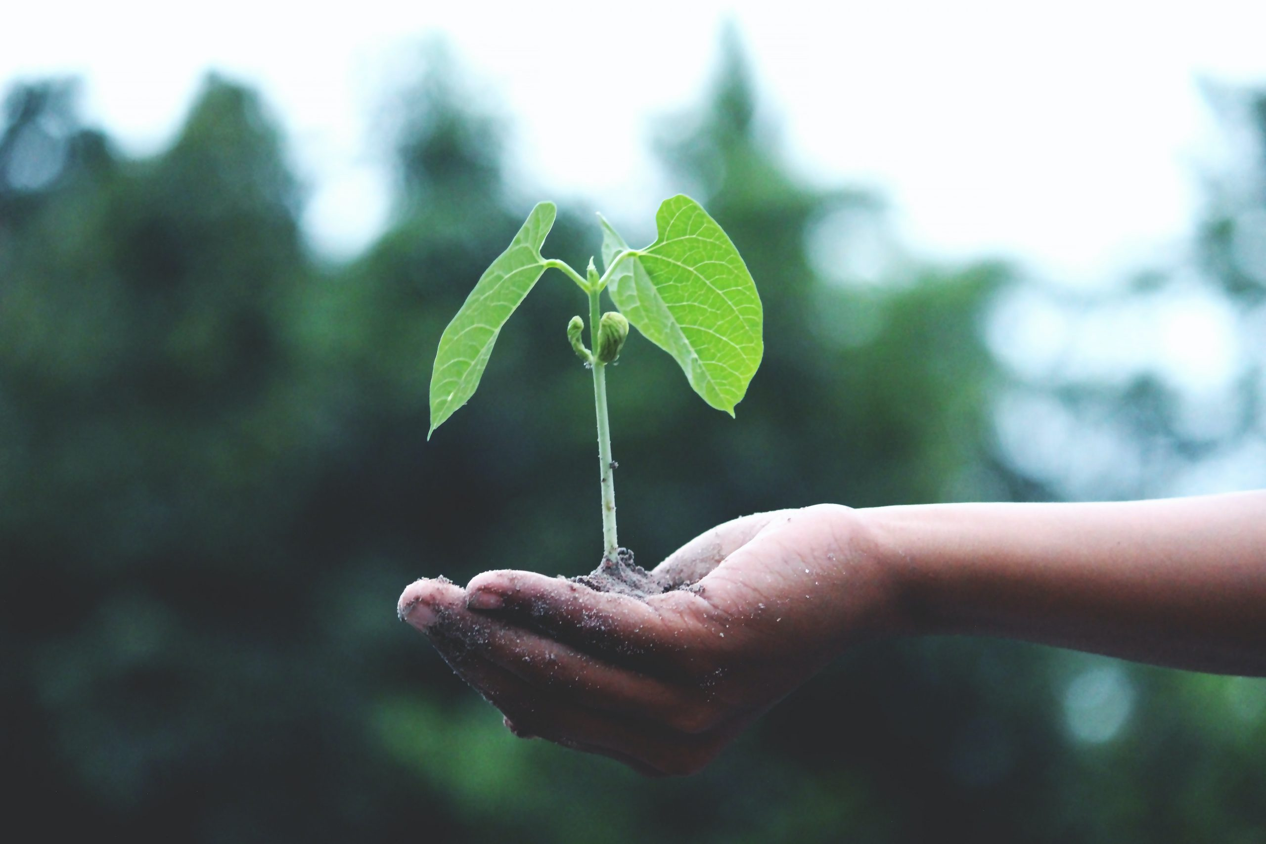 По какой программе проходить дополнительную профпереподготовку по экологии?