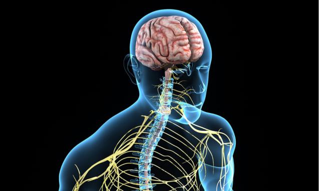 Вебинар «Вегетативная нервная система – Terra Incognita современной медицины»